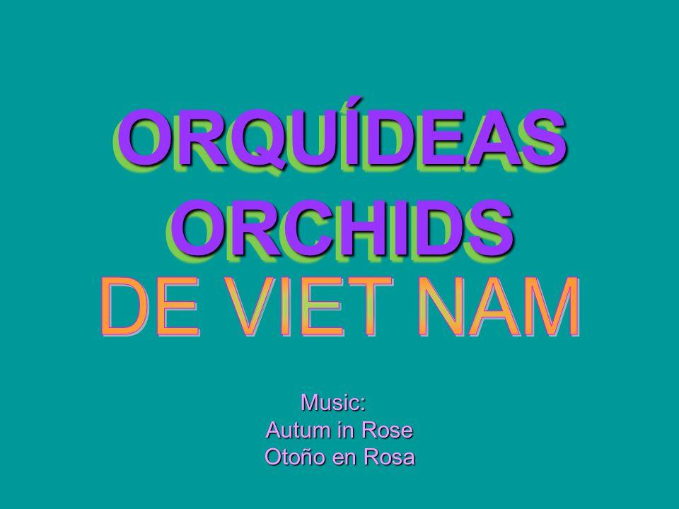 ORQUÍDEAS ORCHIDS ORQUÍDEAS ORCHIDS Music: Autum in Rose Otoño en Rosa