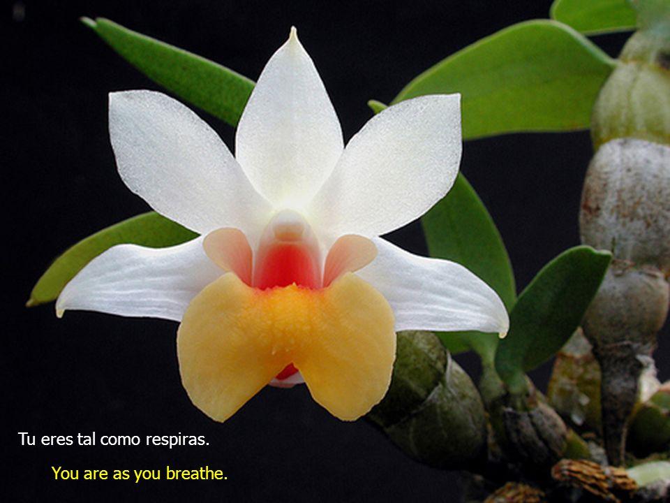 No pierdas tu control en ningún momento, respira. Dont loose your control, breathe deeply.