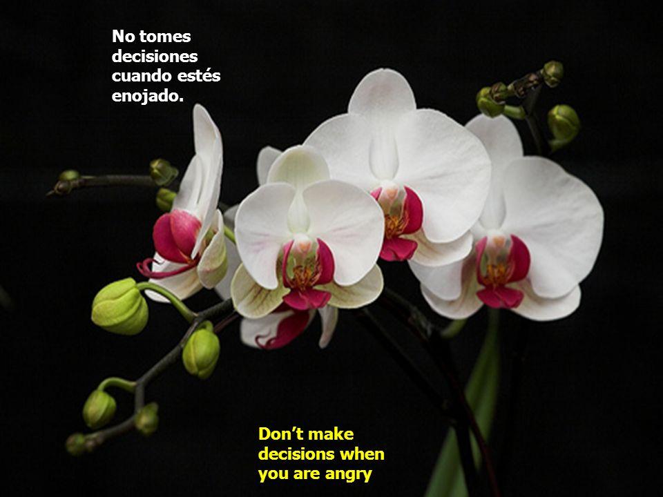 No tomes decisiones cuando estés enojado. Dont make decisions when you are angry