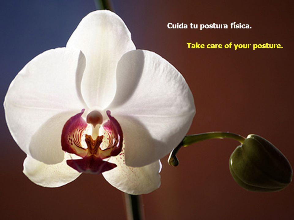 Cuida tu postura física. Take care of your posture.