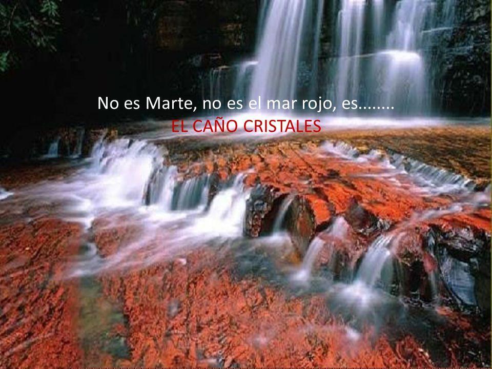 No es Marte, no es el mar rojo, es........ EL CAÑO CRISTALES