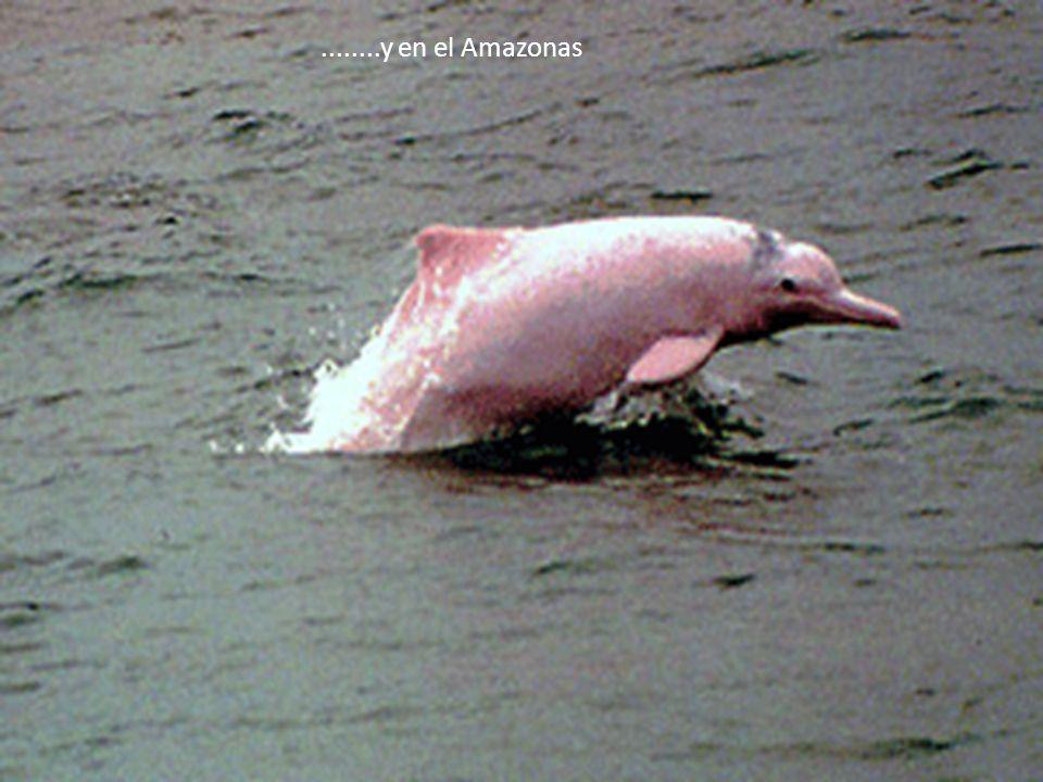 No solamente en Disney, existe un show de delfines..... también lo hay en las islas del Rosario