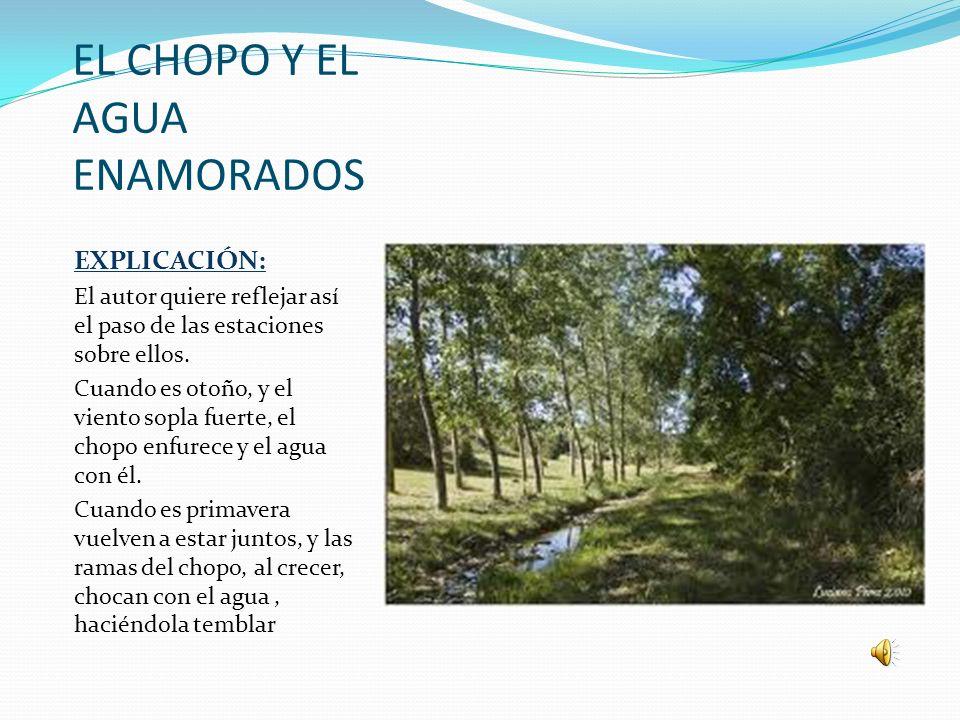 EL CHOPO Y EL AGUA ENAMORADOS EXPLICACIÓN: El autor quiere reflejar así el paso de las estaciones sobre ellos. Cuando es otoño, y el viento sopla fuer