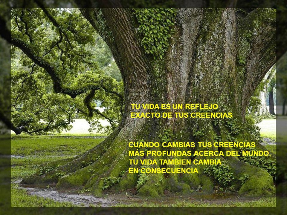 TU VIDA ES UN REFLEJO EXACTO DE TUS CREENCIAS CUANDO CAMBIAS TUS CREENCIAS MÁS PROFUNDAS ACERCA DEL MUNDO, TU VIDA TAMBIEN CAMBIA EN CONSECUENCIA
