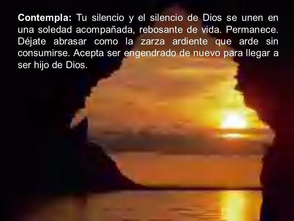 Contempla: Tu silencio y el silencio de Dios se unen en una soledad acompañada, rebosante de vida. Permanece. Déjate abrasar como la zarza ardiente qu