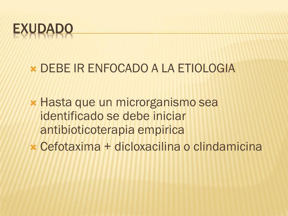 DEBE IR ENFOCADO A LA ETIOLOGIA Hasta que un microrganismo sea identificado se debe iniciar antibioticoterapia empirica Cefotaxima + dicloxacilina o clindamicina