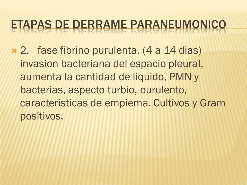 2.- fase fibrino purulenta.