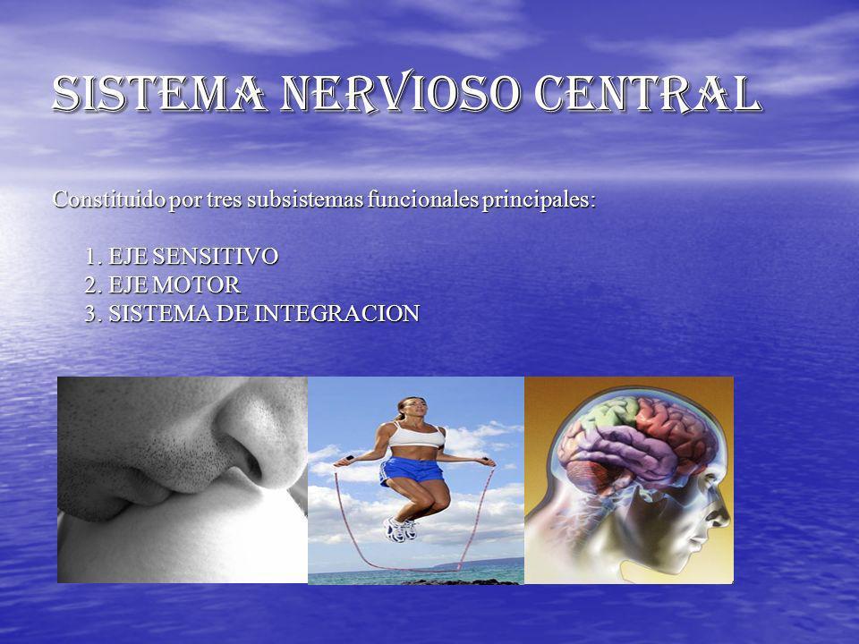SISTEMA NERVIOSO CENTRAL Constituido por tres subsistemas funcionales principales: 1. EJE SENSITIVO 2. EJE MOTOR 3. SISTEMA DE INTEGRACION