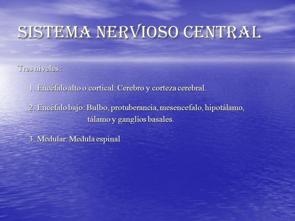 SISTEMA NERVIOSO CENTRAL Tres niveles : 1. Encéfalo alto o cortical: Cerebro y corteza cerebral. 2. Encéfalo bajo: Bulbo, protuberancia, mesencefalo,