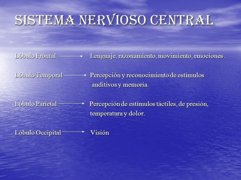 SISTEMA NERVIOSO CENTRAL Lóbulo Frontal Lenguaje, razonamiento, movimiento, emociones. Lóbulo Temporal Percepción y reconocimiento de estímulos auditi