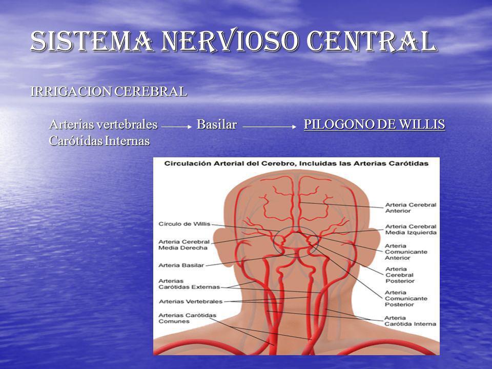 IRRIGACION CEREBRAL Arterias vertebrales Basilar PILOGONO DE WILLIS Carótidas Internas