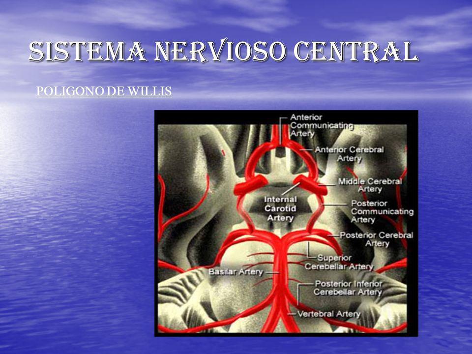 SISTEMA NERVIOSO CENTRAL POLIGONO DE WILLIS