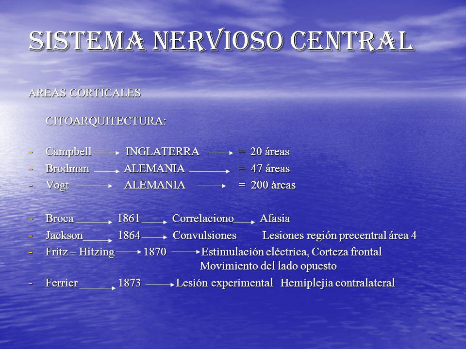 SISTEMA NERVIOSO CENTRAL AREAS CORTICALES CITOARQUITECTURA: - Campbell INGLATERRA = 20 áreas - Brodman ALEMANIA = 47 áreas - Vogt ALEMANIA = 200 áreas