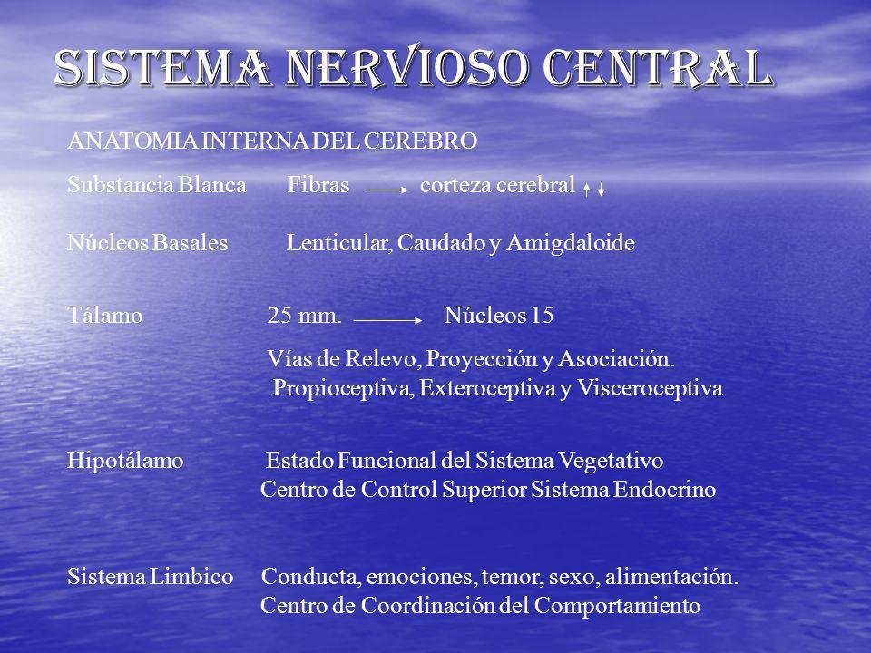 ANATOMIA INTERNA DEL CEREBRO Substancia Blanca Fibras corteza cerebral Núcleos Basales Lenticular, Caudado y Amigdaloide Tálamo 25 mm. Núcleos 15 Vías