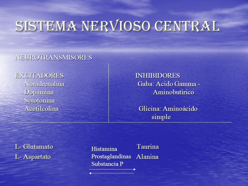 NEUROTRANSMISORES EXCITADORES INHIBIDORES Noradrenalina Gaba: Acido Gamma - Dopamina Aminobutirico Serotonina Acetilcolina Glicina: Aminoácido simple
