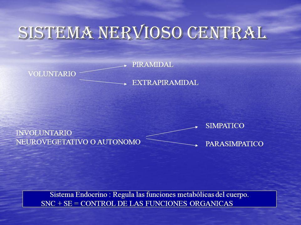 SISTEMA NERVIOSO CENTRAL VOLUNTARIO PIRAMIDAL EXTRAPIRAMIDAL INVOLUNTARIO NEUROVEGETATIVO O AUTONOMO SIMPATICO PARASIMPATICO Sistema Endocrino : Regul