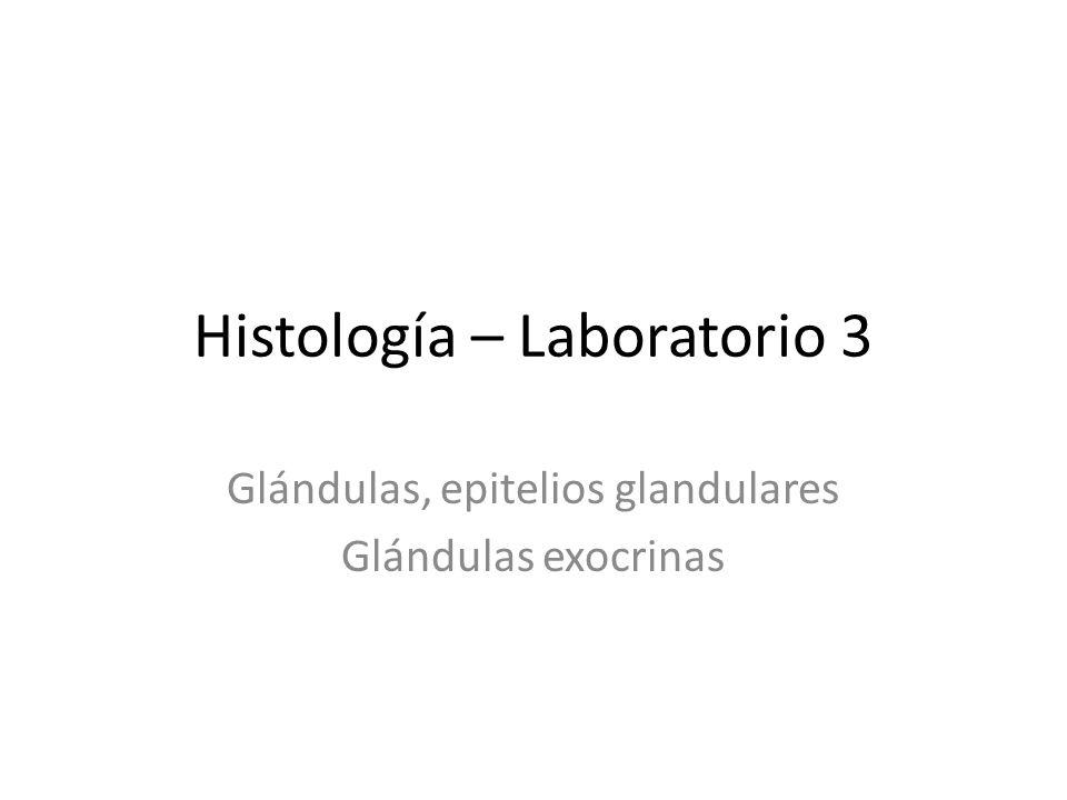 Histología – Laboratorio 3 Glándulas, epitelios glandulares Glándulas exocrinas
