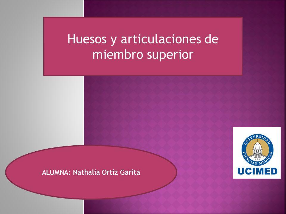 Huesos y articulaciones de miembro superior ALUMNA: Nathalia Ortiz Garita