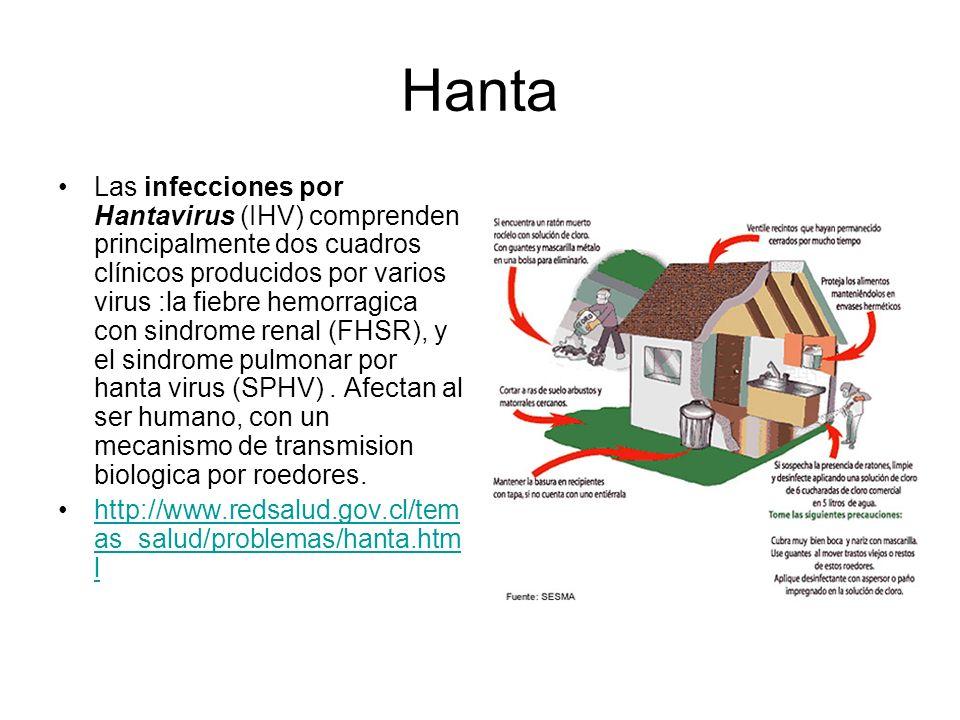 Hanta Las infecciones por Hantavirus (IHV) comprenden principalmente dos cuadros clínicos producidos por varios virus :la fiebre hemorragica con sindr