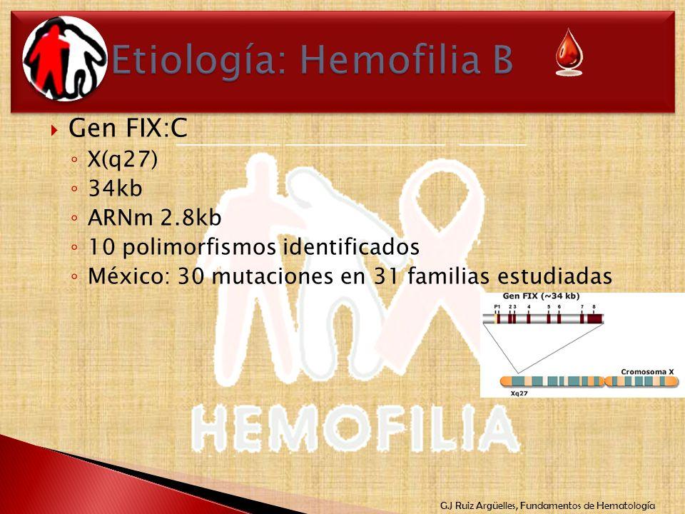 G.J Ruiz Argüelles, Fundamentos de Hematología Gen FIX:C X(q27) 34kb ARNm 2.8kb 10 polimorfismos identificados México: 30 mutaciones en 31 familias es
