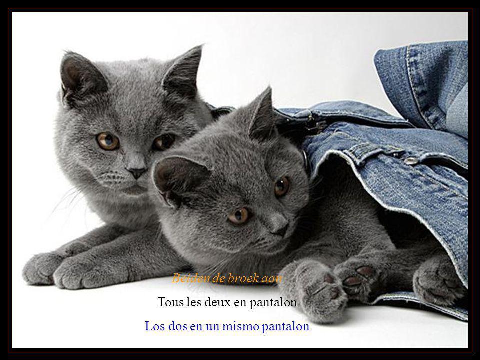 Beiden de broek aan Tous les deux en pantalon Los dos en un mismo pantalon