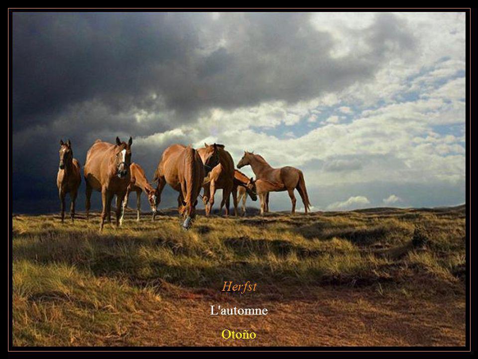 Herfst L'automne Otoño