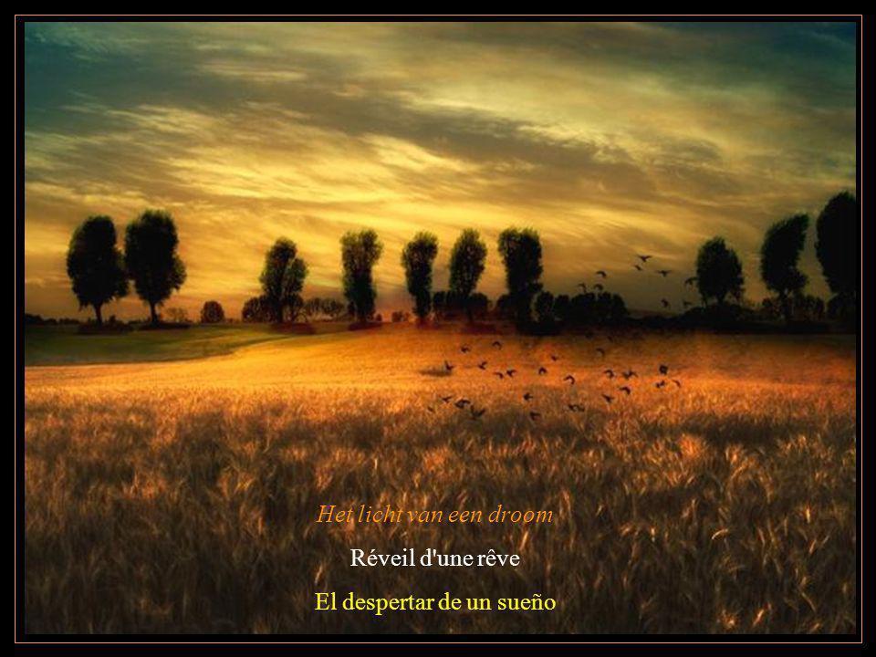 Het licht van een droom Réveil d'une rêve El despertar de un sueño