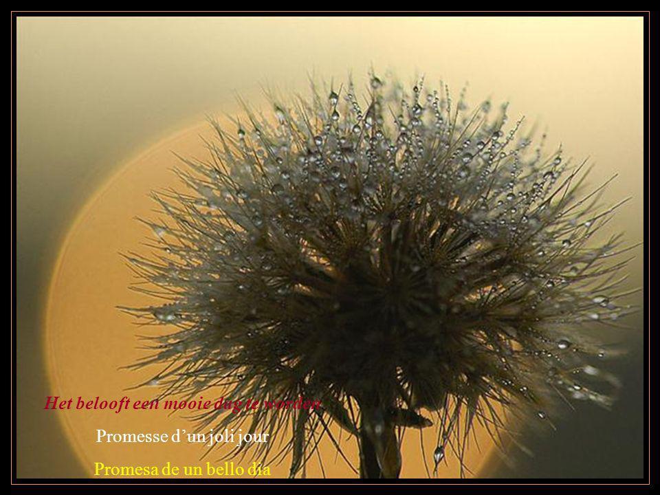 Het belooft een mooie dag te worden Promesse dun joli jour Promesa de un bello dia