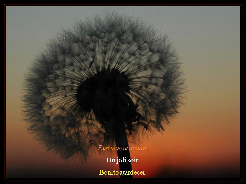 Een mooie avond Un joli soir Bonito atardecer