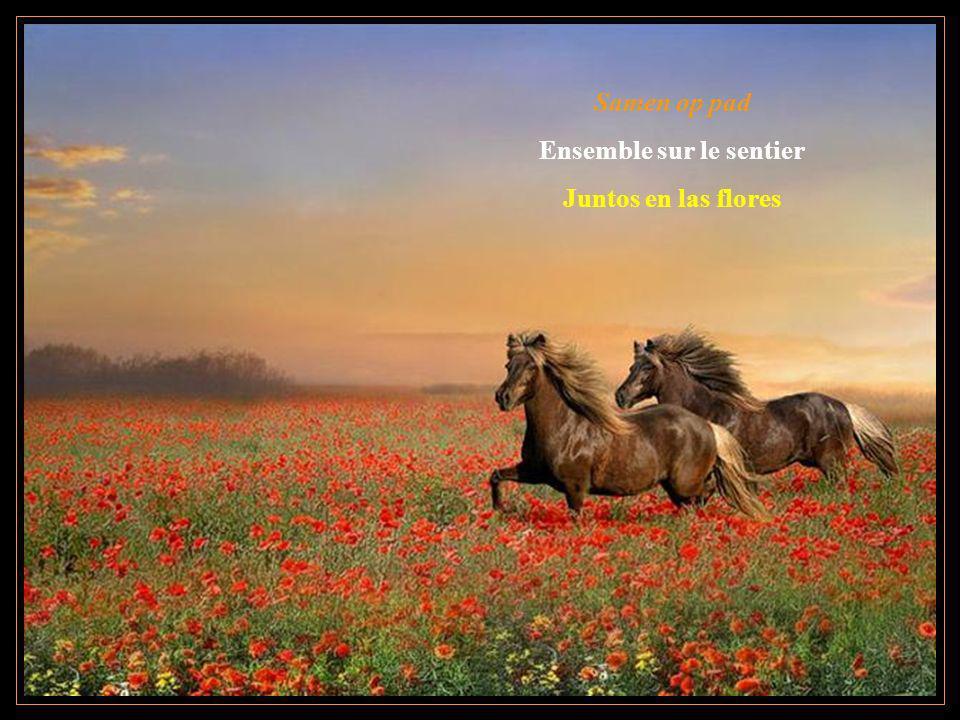 Samen op pad Ensemble sur le sentier Juntos en las flores