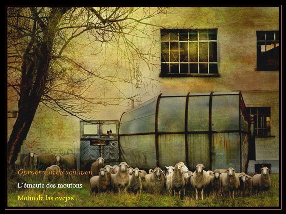 Oproer van de schapen Lémeute des moutons Motin de las ovejas