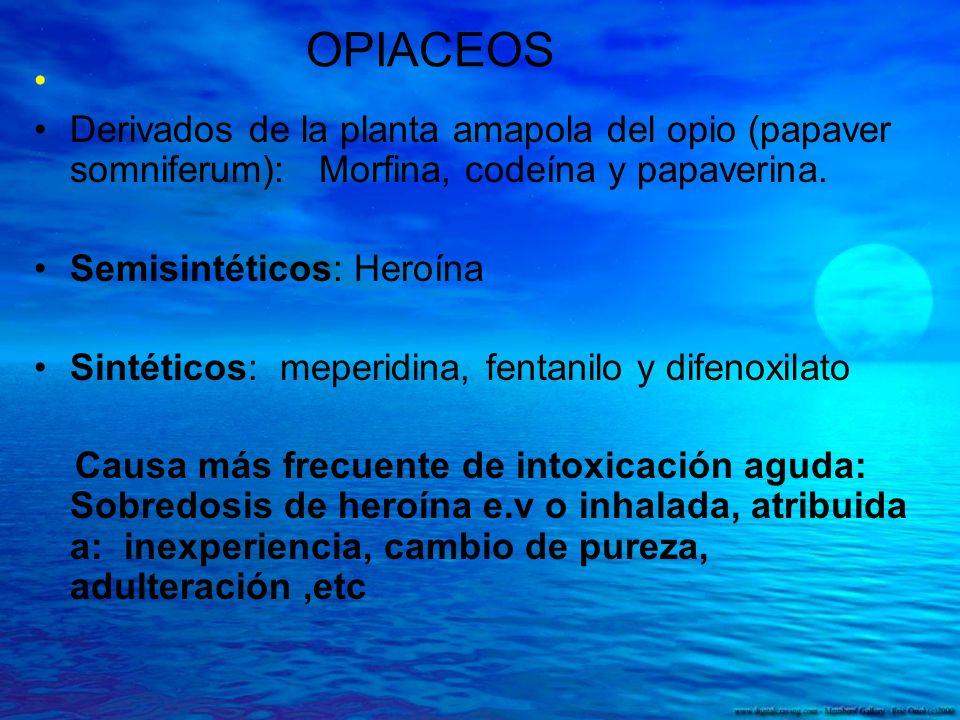 OPIACEOS Derivados de la planta amapola del opio (papaver somniferum): Morfina, codeína y papaverina. Semisintéticos: Heroína Sintéticos: meperidina,