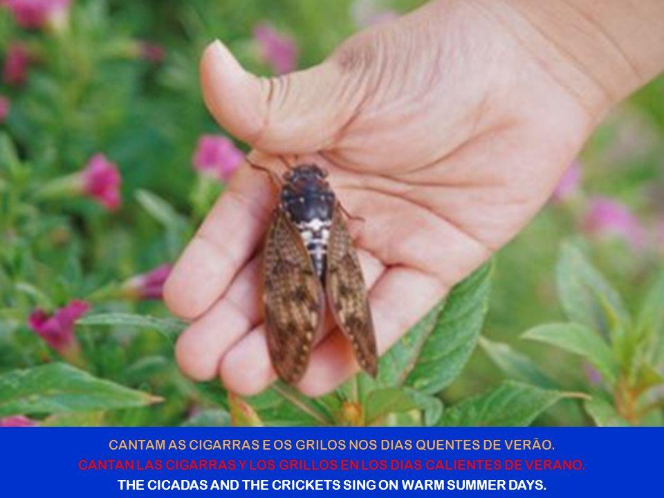 FLORESCEM AS ÁRVORES E AS PLANTAS PERFUMANDO A BRISA FRESCA NAS MANHÃS DE PRIMAVERA.