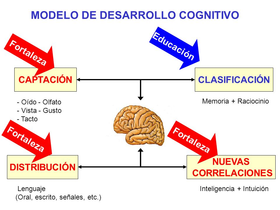 CAPTACIÓN - Oído - Olfato - Vista - Gusto - Tacto CLASIFICACIÓN Memoria + Raciocinio DISTRIBUCIÓN Lenguaje (Oral, escrito, señales, etc.) NUEVAS CORRE