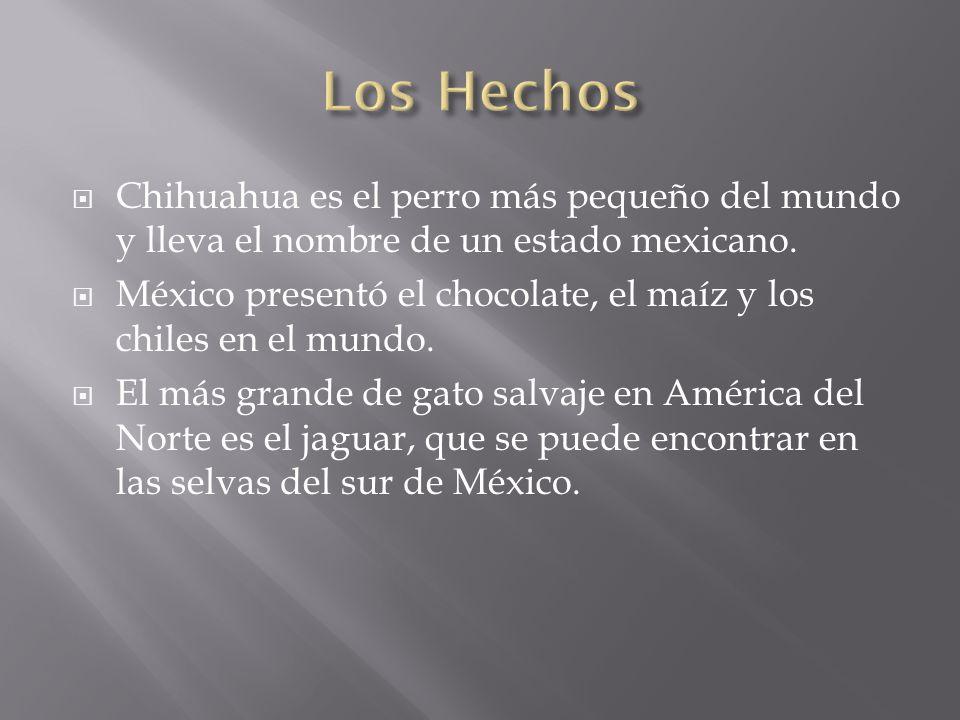 Chihuahua es el perro más pequeño del mundo y lleva el nombre de un estado mexicano.