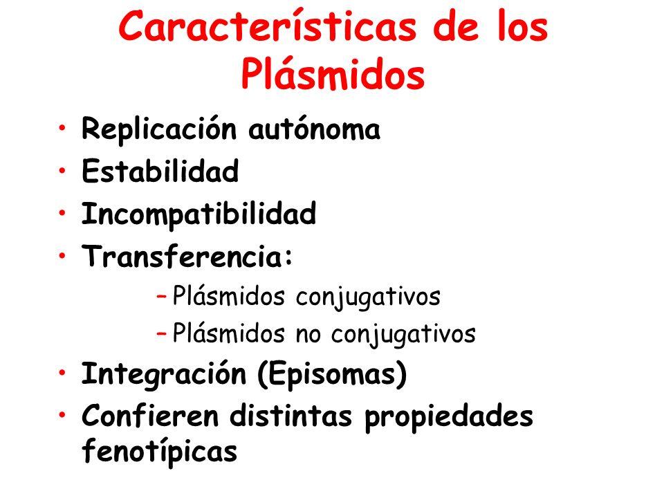Características de los Plásmidos Replicación autónoma Estabilidad Incompatibilidad Transferencia: –Plásmidos conjugativos –Plásmidos no conjugativos Integración (Episomas) Confieren distintas propiedades fenotípicas