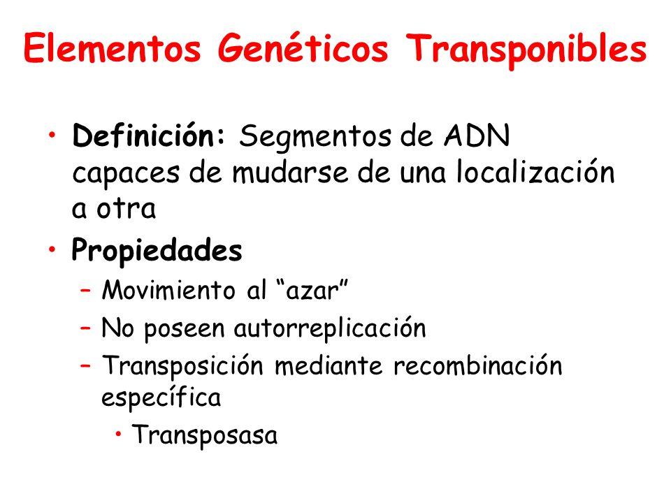 Elementos Genéticos Transponibles Definición: Segmentos de ADN capaces de mudarse de una localización a otra Propiedades –Movimiento al azar –No poseen autorreplicación –Transposición mediante recombinación específica Transposasa