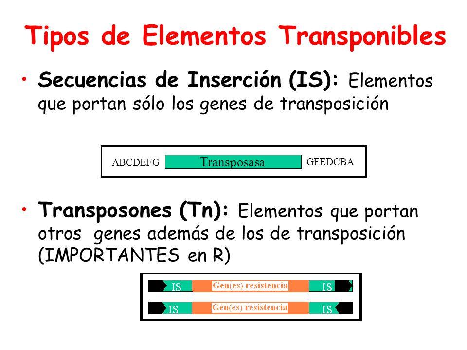 Tipos de Elementos Transponibles Secuencias de Inserción (IS): Elementos que portan sólo los genes de transposición Transposones (Tn): Elementos que portan otros genes además de los de transposición (IMPORTANTES en R) Transposasa ABCDEFG GFEDCBA