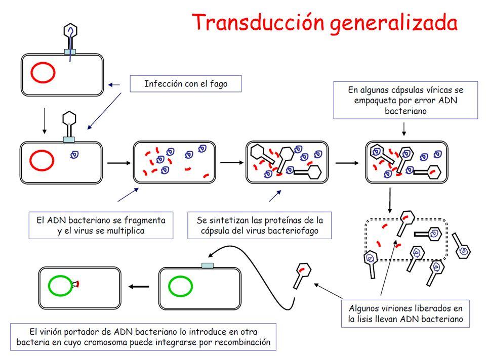 Transducción generalizada