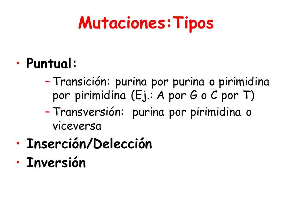 Mutaciones:Tipos Puntual: –Transición: purina por purina o pirimidina porpirimidina (Ej.: A por G o C por T) –Transversión: purina por pirimidina o viceversa Inserción/Delección Inversión