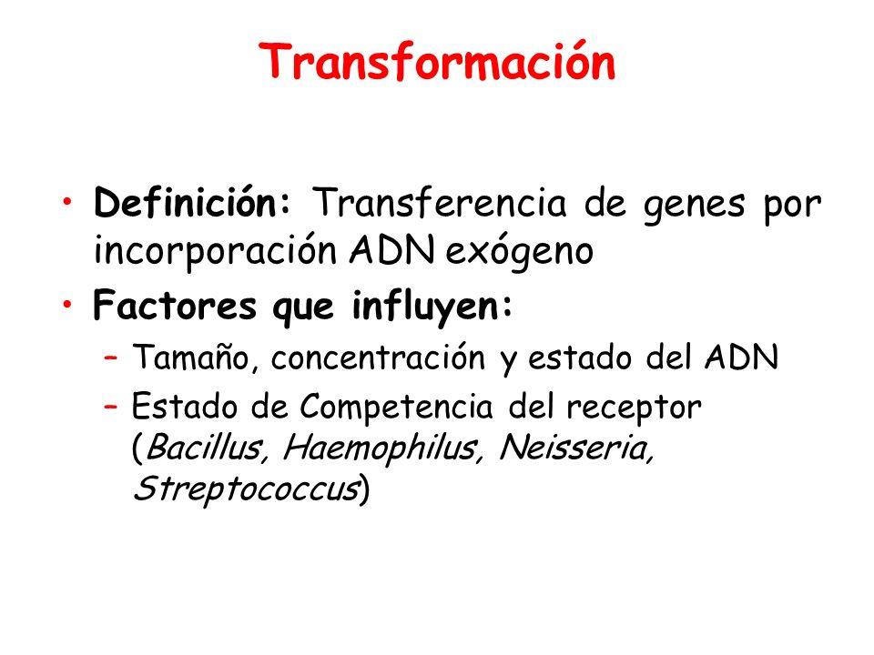 Transformación Definición: Transferencia de genes por incorporación ADN exógeno Factores que influyen: –Tamaño, concentración y estado del ADN –Estado de Competencia del receptor (Bacillus, Haemophilus, Neisseria, Streptococcus)