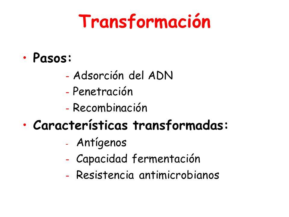 Transformación Pasos: - Adsorción del ADN - Penetración - Recombinación Características transformadas: - Antígenos - Capacidad fermentación - Resistencia antimicrobianos