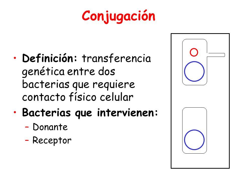 Conjugación Definición: transferencia genética entre dos bacterias que requiere contacto físico celular Bacterias que intervienen: –Donante –Receptor Donor Recipient