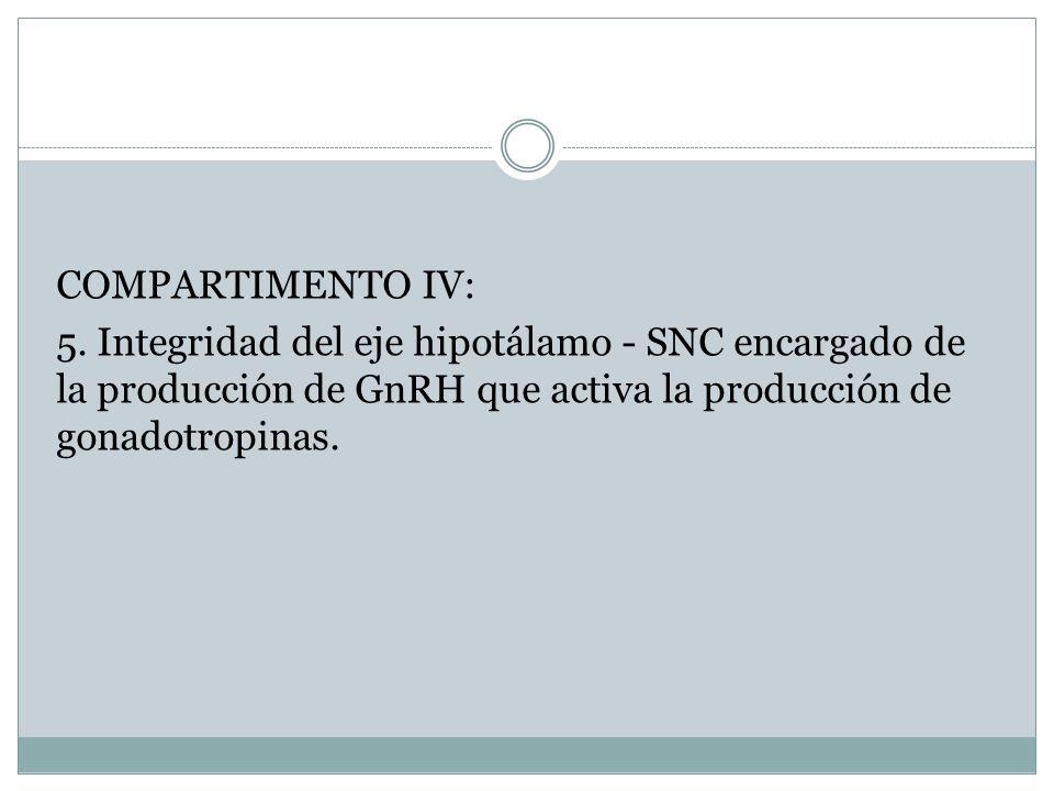 COMPARTIMENTO IV: 5. Integridad del eje hipotálamo - SNC encargado de la producción de GnRH que activa la producción de gonadotropinas.