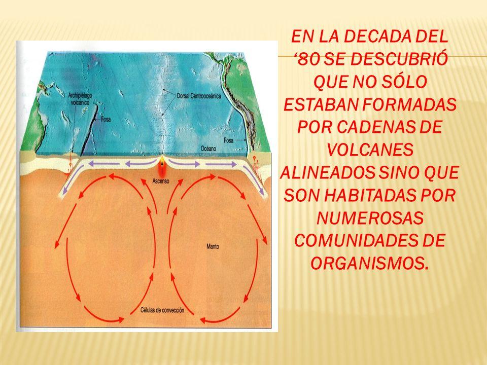 EN LA DECADA DEL 80 SE DESCUBRIÓ QUE NO SÓLO ESTABAN FORMADAS POR CADENAS DE VOLCANES ALINEADOS SINO QUE SON HABITADAS POR NUMEROSAS COMUNIDADES DE OR