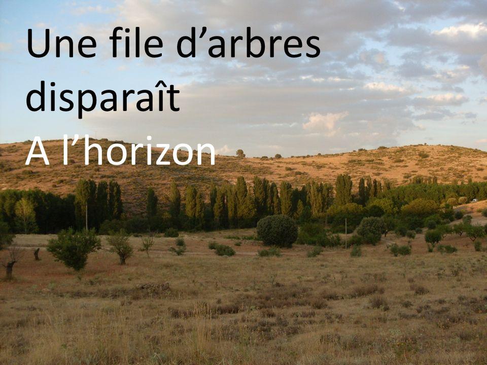Une file darbres disparaît A lhorizon