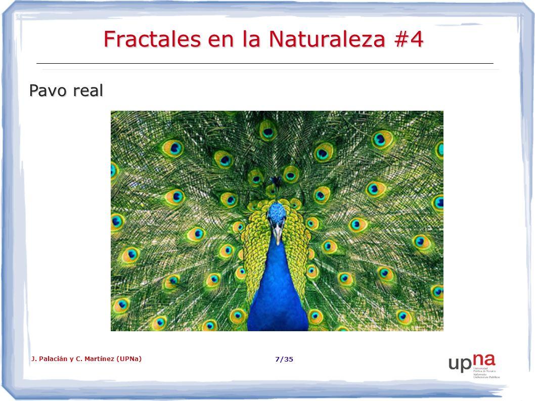 J. Palacián y C. Martínez (UPNa) 8/35 Fractales en la Naturaleza #5 Ramas de árbol