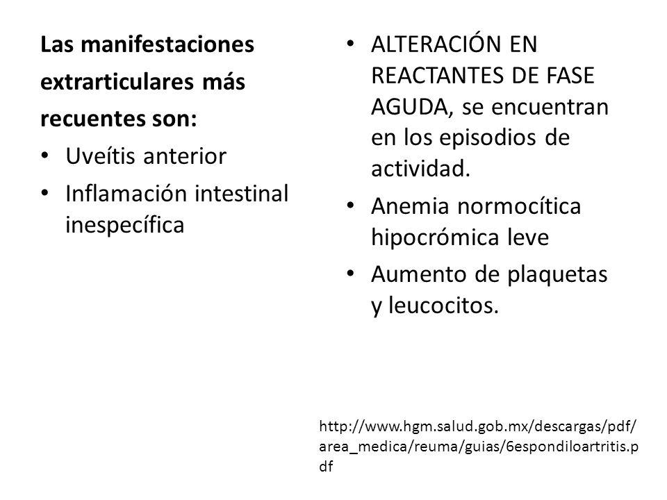 Las manifestaciones extrarticulares más recuentes son: Uveítis anterior Inflamación intestinal inespecífica ALTERACIÓN EN REACTANTES DE FASE AGUDA, se