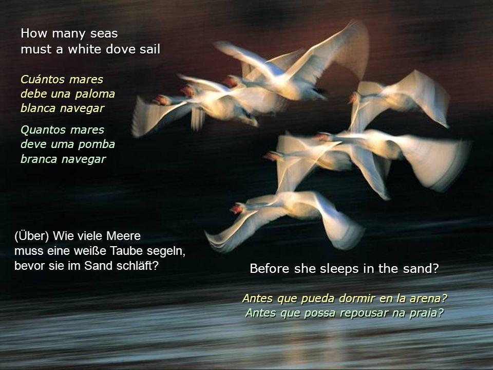 How many seas must a white dove sail Cuántos mares debe una paloma blanca navegar Quantos mares deve uma pomba branca navegar Before she sleeps in the sand.