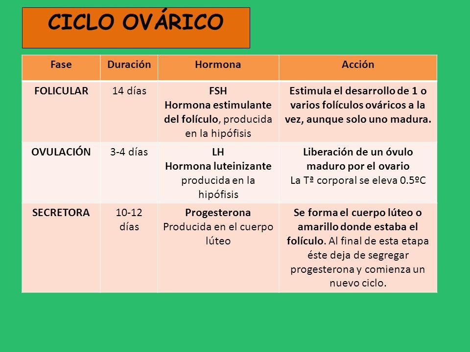 CICLO OVÁRICO FaseDuraciónHormonaAcción FOLICULAR14 díasFSH Hormona estimulante del folículo, producida en la hipófisis Estimula el desarrollo de 1 o